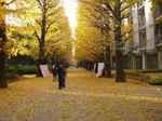 KomabaIchoStreet.jpg